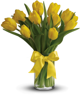Stunning Yellow Tulips